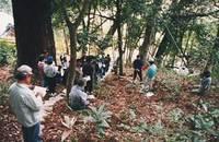 常磐のカシ林と遊歩道